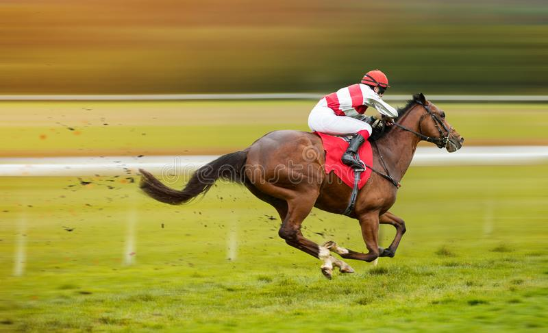 Lopphäst med jockeyn på det hem- rakt arkivbild