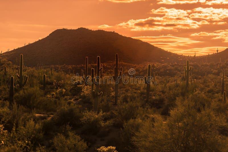 Loppturismfoto av Arizona soluppsättningar över Arizona ökenlandskap nära Phoenix, Az, USA arkivfoton