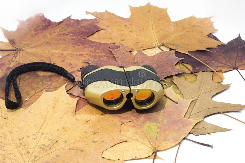 Lornetki na jesień liściach pojedynczy białe tło zdjęcie stock