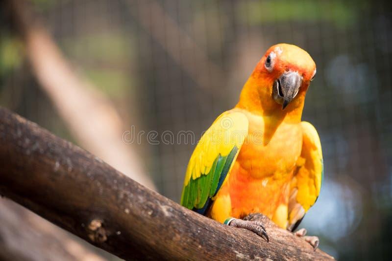 Loro colorido, macaws que se sientan en el mundo del safari del inicio de sesión, Bangkok imagenes de archivo