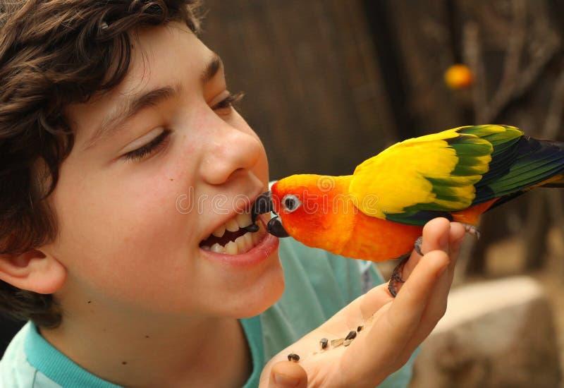 Loro de alimentación del muchacho del adolescente con la foto divertida de la semilla del sonflower foto de archivo libre de regalías