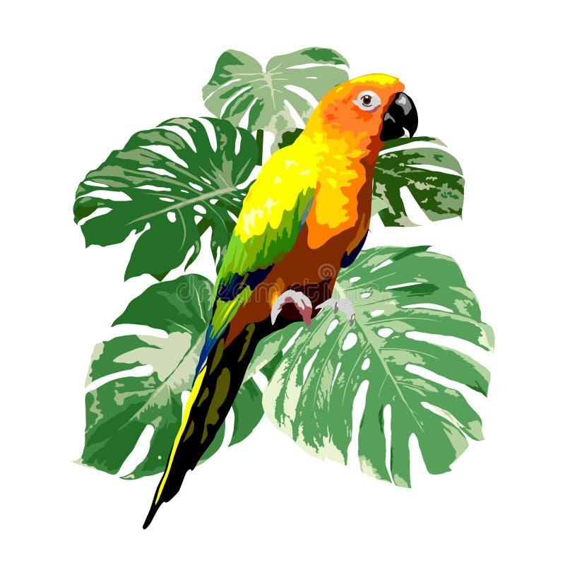 Loro del conure de Sun con el ejemplo tropical verde de la hoja del monstera libre illustration