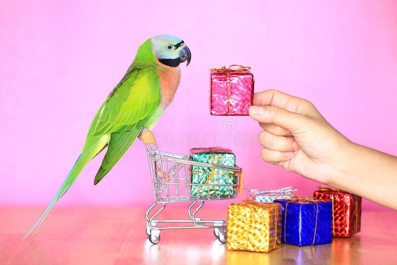 Loro en el carro de la compra miniatura modelo y la caja de regalo colorida por la Navidad y la Feliz Año Nuevo en fondo rosado fotografía de archivo libre de regalías