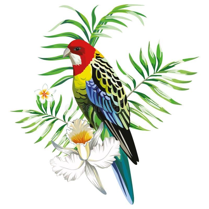 Loro multicolor con backgro del blanco de las plantas tropicales y de las flores stock de ilustración