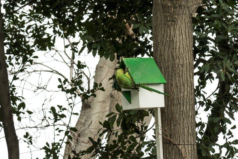 Loro verde en nidal en un árbol imagen de archivo libre de regalías
