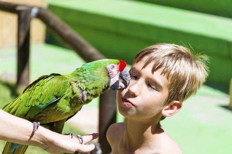 Loro verde que besa a un muchacho - ame los animales imagenes de archivo