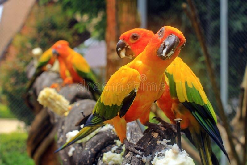 Download Loros imagen de archivo. Imagen de pájaros, loros, animales - 64205965