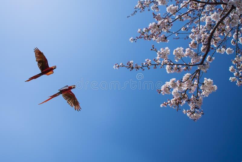 Loros coloridos sobre el cielo brillante fotografía de archivo libre de regalías