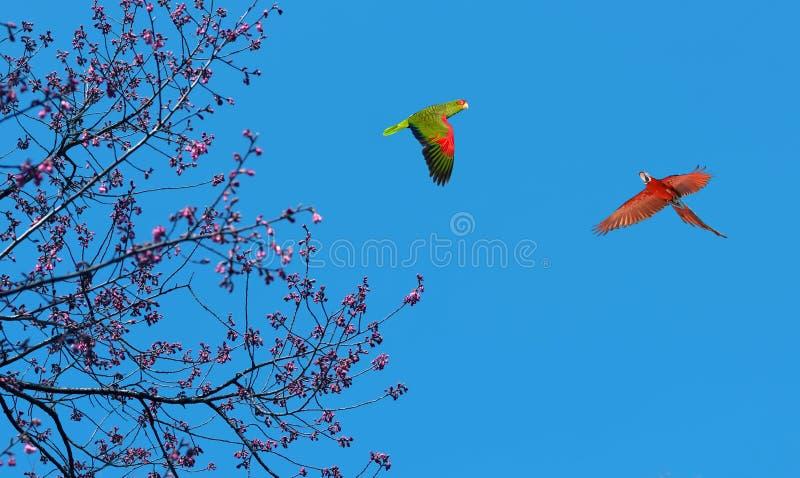 Loros coloridos sobre el cielo brillante imagen de archivo libre de regalías