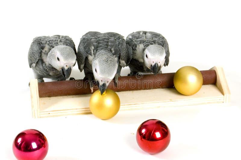 Loros del bebé que juegan con las bolas de la Navidad imagen de archivo libre de regalías