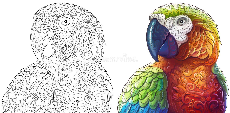 Loros del macaw de Zentangle ilustración del vector