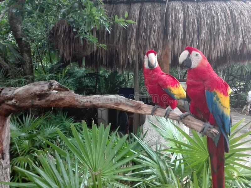 Loros en selva tropical del paraíso fotos de archivo libres de regalías