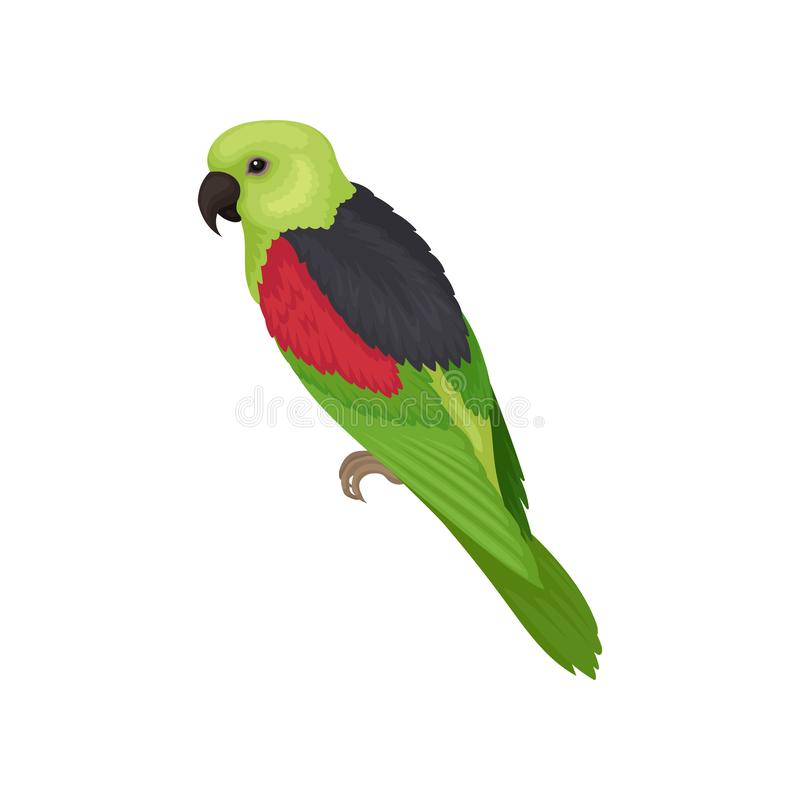 Lory parrot with bright feathers. Australian bird. Fauna theme. Detailed flat vector element for ornithology book stock illustration