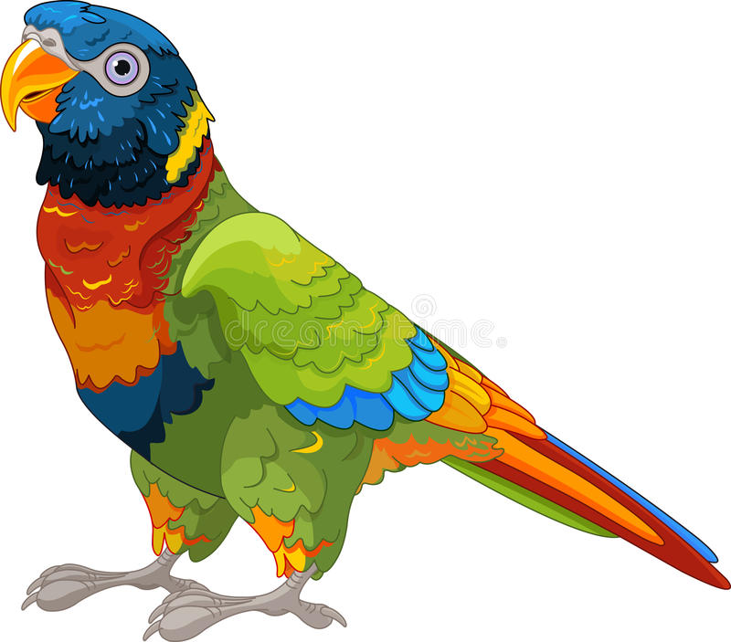 Lory Parrot stock illustration