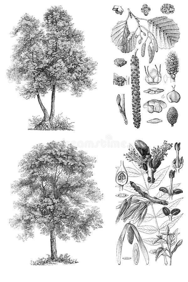 Los árboles aislaron imágenes libre illustration