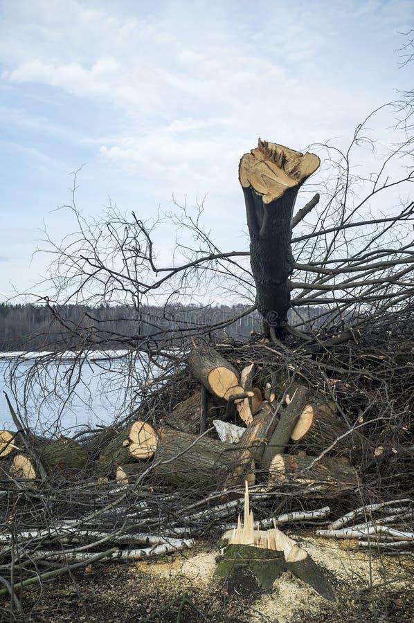 Los árboles aserrados mienten en un montón en el banco del río, contra la perspectiva del bosque, durante el día de invierno fotografía de archivo