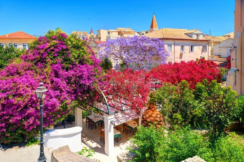 Los árboles coloridos del parque del jardín de la isla de Corfú florecen, vieja arquitectura de las construcciones de viviendas d fotos de archivo
