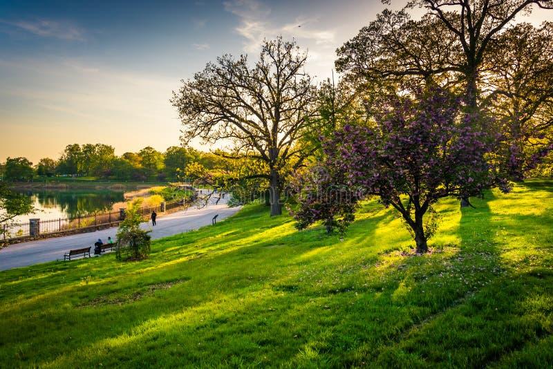 Los árboles coloridos y la vista del lago druid en colina del druida parquean, Baltim fotos de archivo libres de regalías