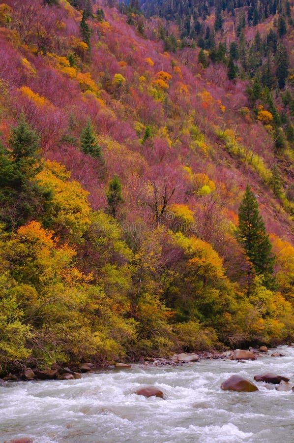 Los árboles colorized fotografía de archivo