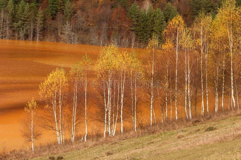 Los árboles contaminaron el lago foto de archivo libre de regalías