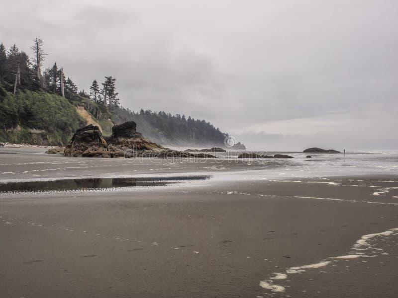 Los árboles crecen en pilas del mar en la playa arenosa foto de archivo libre de regalías