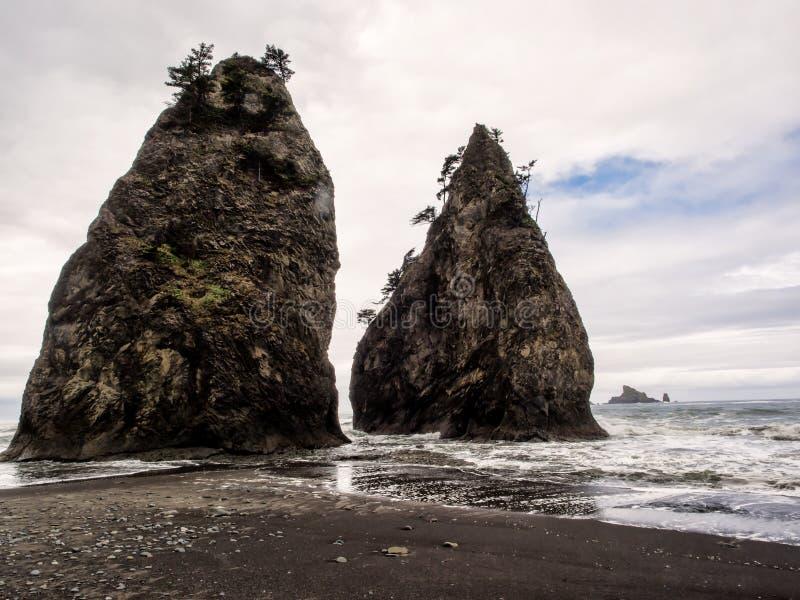Los árboles crecen en pilas del mar en la playa arenosa imagenes de archivo