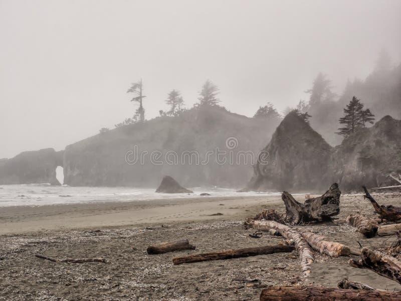 Los árboles crecen en pilas del mar en la playa arenosa fotografía de archivo libre de regalías