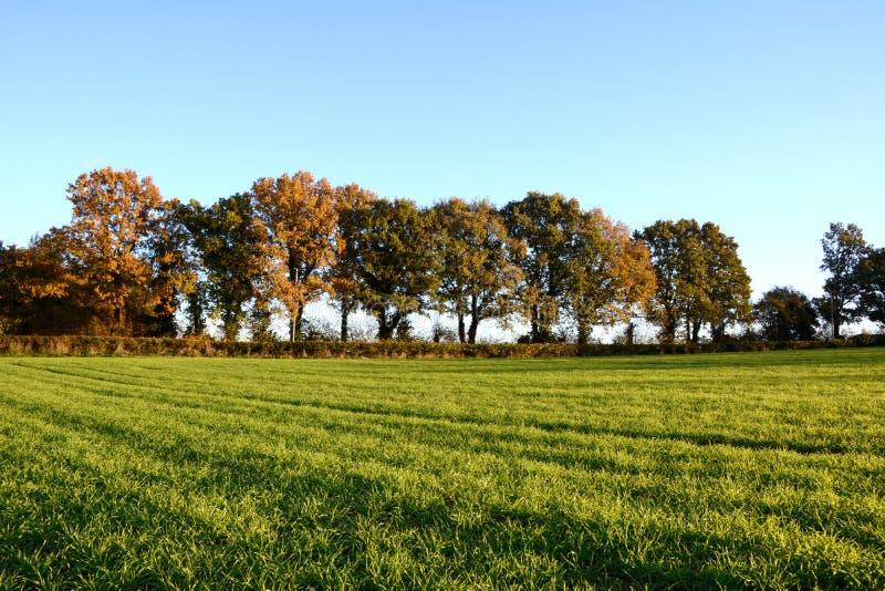 Los árboles de la caída afilan un campo de granja fotos de archivo