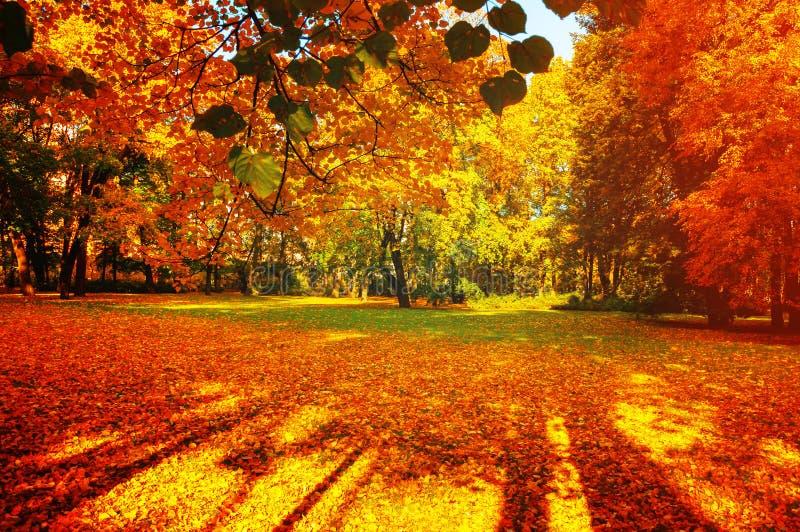 Los árboles de la caída en parque soleado del otoño se encendieron por la sol - paisaje soleado de la caída en luz del sol suave fotos de archivo