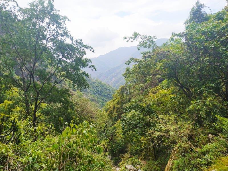 Los árboles de la montaña miran son muy owsome imagenes de archivo