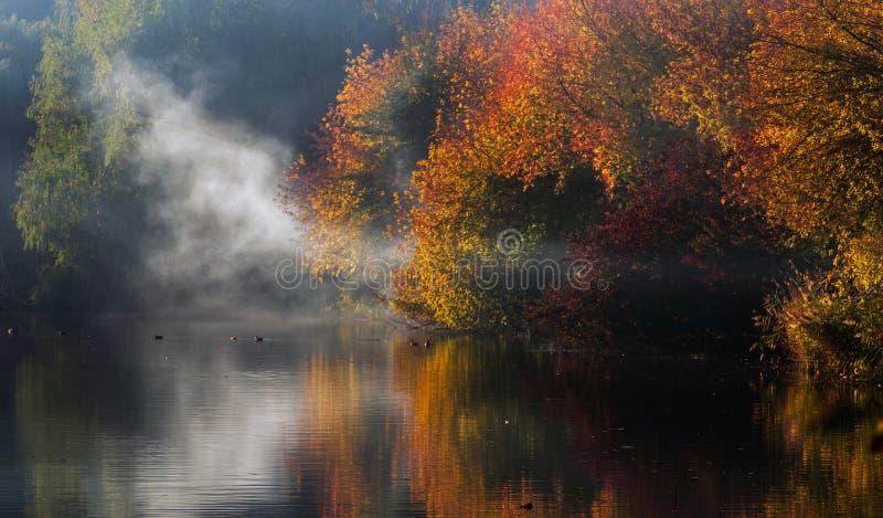 Los árboles del otoño con las hojas rojas y amarillas se reflejan en el agua del lago con la niebla fotos de archivo libres de regalías