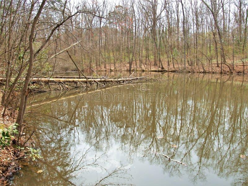 Los árboles deshojados reflejan en la pequeña charca imagenes de archivo
