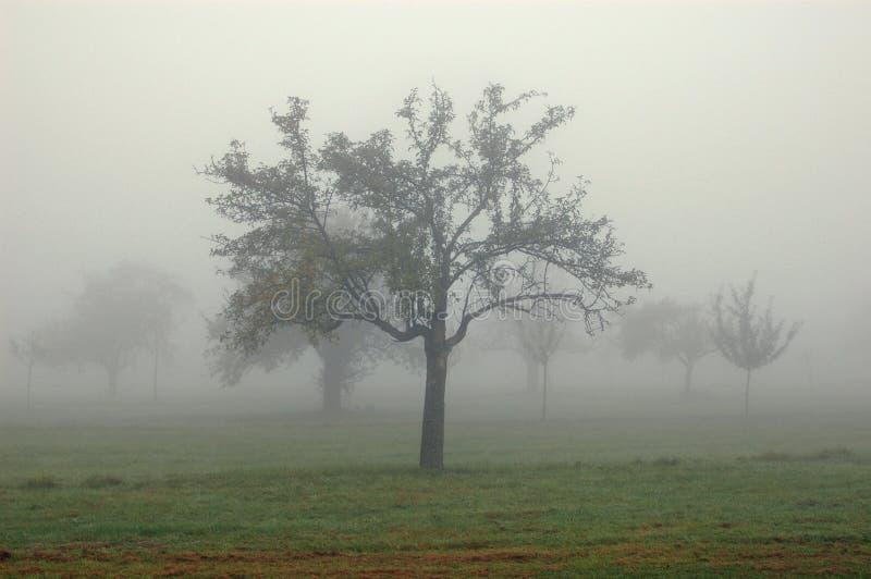 Los árboles en la niebla imagen de archivo