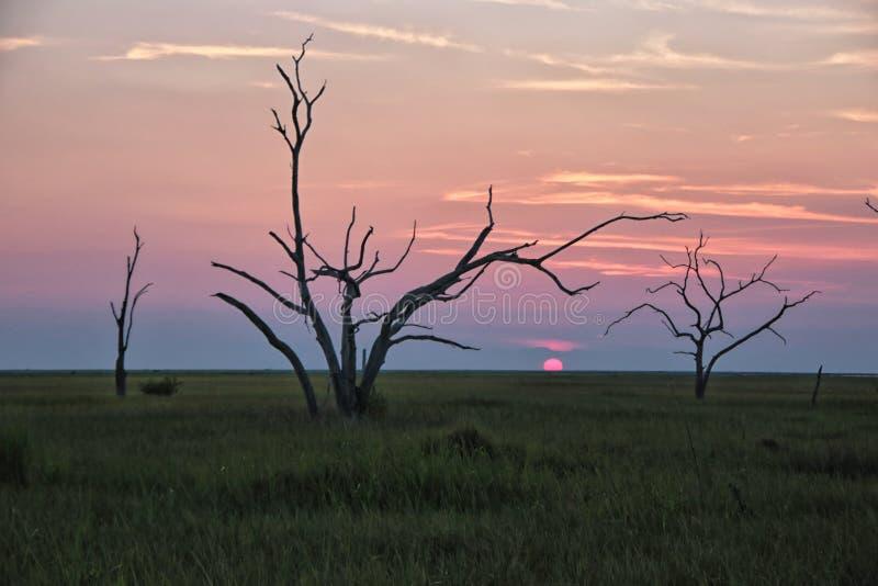 Los árboles esqueléticos fotos de archivo