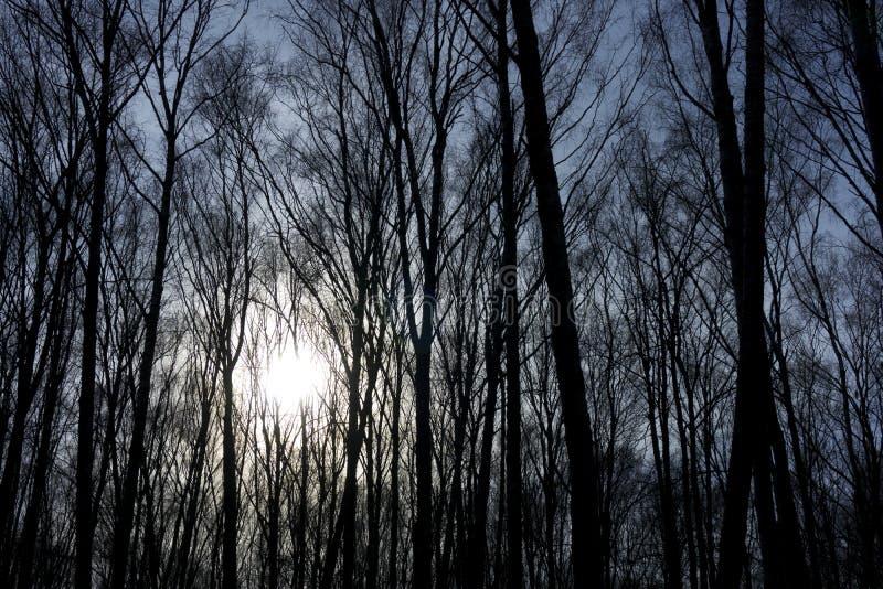 Los árboles forestales de la selva con luz del sol calva deshojada de las ramas vienen detrás por la tarde dan un otoño místico d foto de archivo
