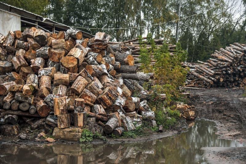 Los árboles forestales registran los troncos derribados por la industria de registración de la madera fotografía de archivo