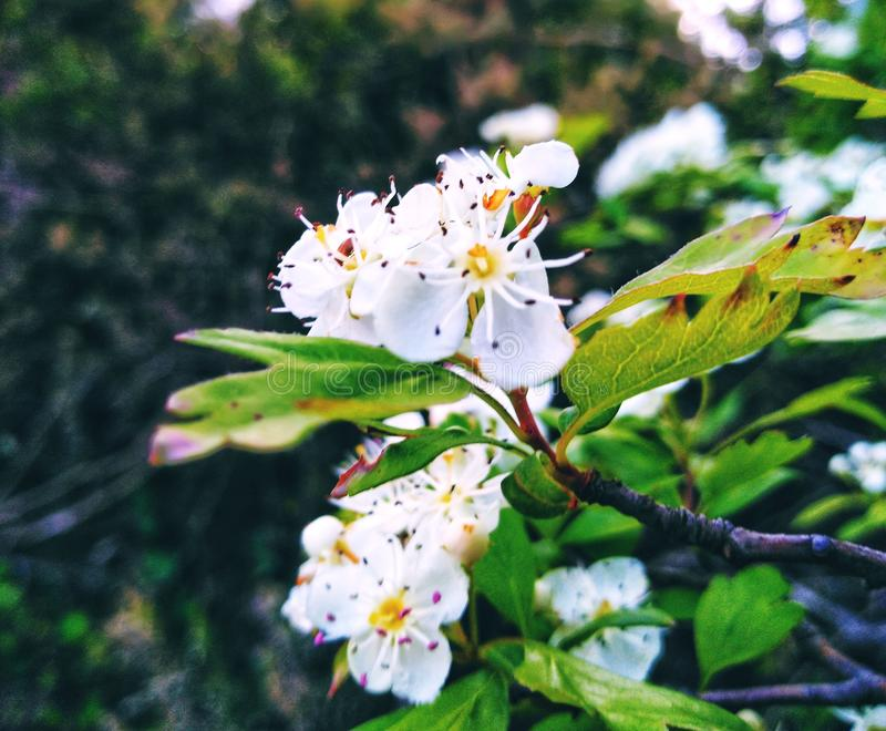Los árboles frutales fueron contestados foto de archivo