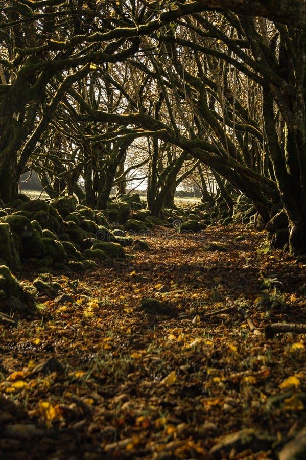 Los árboles hacen un túnel durante el otoño/el túnel del bosque con colores vibrantes imágenes de archivo libres de regalías