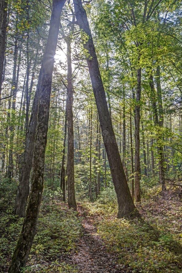 Los árboles hechos excursionismo vienen juntos como un punto en verano tardío imágenes de archivo libres de regalías