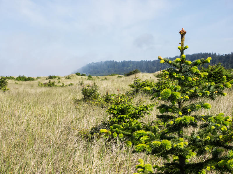 Los árboles jovenes crecen en un prado imagenes de archivo