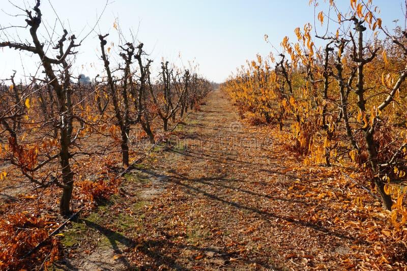 Los árboles, las hojas que caían vinieron otoño en España imagen de archivo libre de regalías