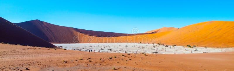 Los árboles muertos de la espina del camello en Deadvlei secan la cacerola con el suelo agrietado en el medio de las dunas rojas  imágenes de archivo libres de regalías