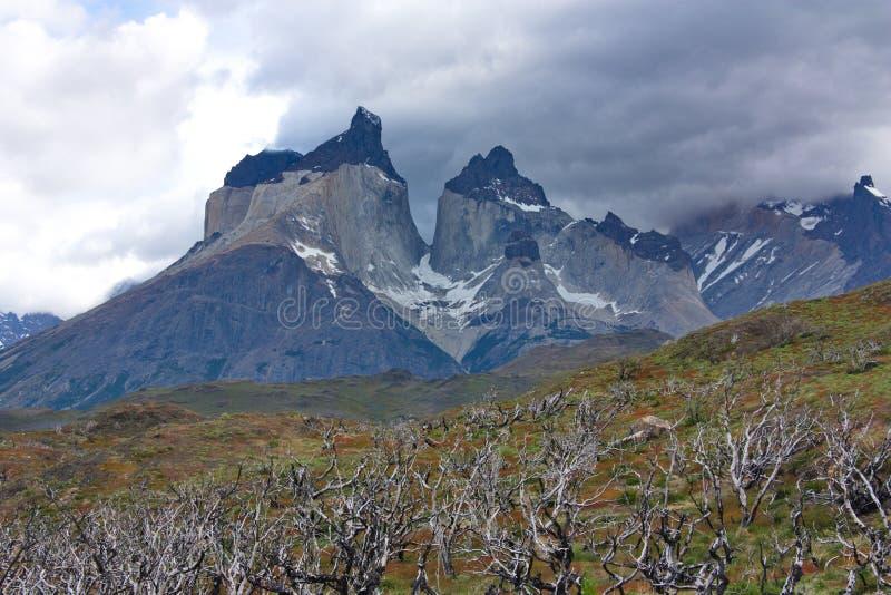 Los árboles quemados-abajo contra la perspectiva de Cuernos del Paine en el parque nacional de Torres del Paine en Chile imágenes de archivo libres de regalías