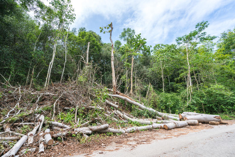 Los árboles redujeron en el bosque, la tala de árboles o el concepto del calentamiento del planeta, aspecto medioambiental imágenes de archivo libres de regalías