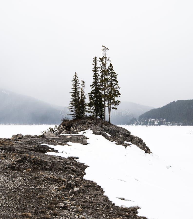 Los árboles solitarios se colocan altos sobre un lago congelado en el parque nacional de Banff foto de archivo libre de regalías