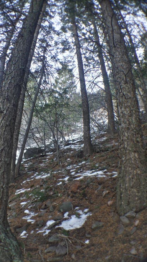 Los árboles suben la colina foto de archivo libre de regalías