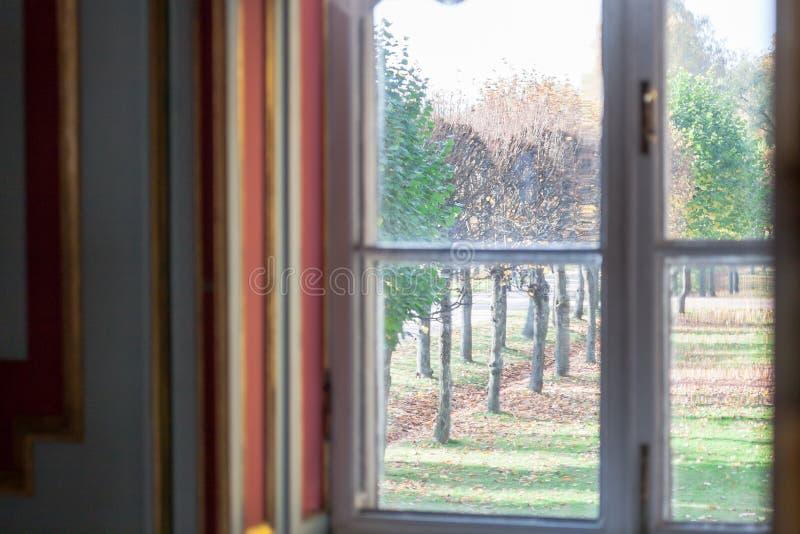 Los árboles viejos se colocan en fila detrás de la ventana en la estación del otoño fotografía de archivo libre de regalías