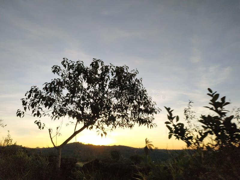 Los árboles y el sol, la naturaleza es hermosos perfecto fotografía de archivo