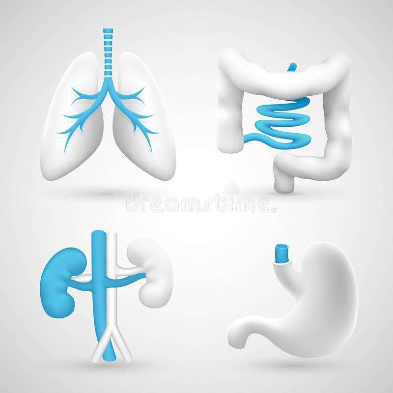 Los órganos humanos en un gris blanco del fondo se oponen stock de ilustración