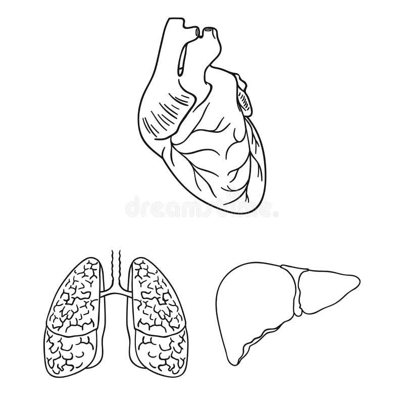 Los órganos Humanos Resumen Iconos En La Colección Del Sistema Para ...